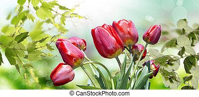 Garden Tulips. Spring nature