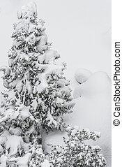 garden under snow in winter