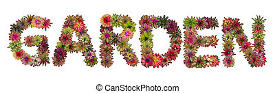 Garden uppercase letters from bromeliad flower alphabet isolated on white background