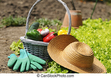 garden vegetables - basket of vegetables freshly picked in...