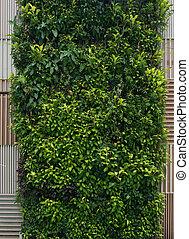 garden., verticaal, sterke drank, muur, groene, foliage., achtergrond