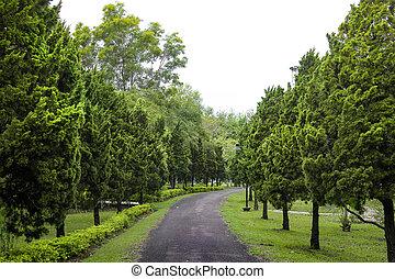 Garden Walking Path Serrounded By Juniper Tree, Tropical Garden Path