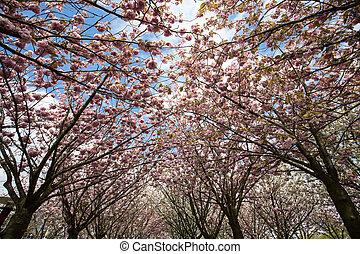 Garden with flowering trees inspired by Van Gogh paintings ...