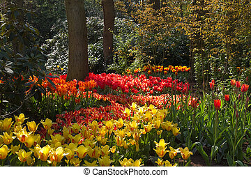 Garden with lots of colorful tulips