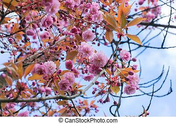 Garden with magnolia tree