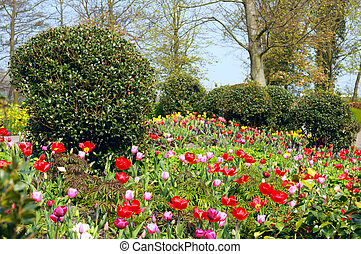 garden with many colorful flowers