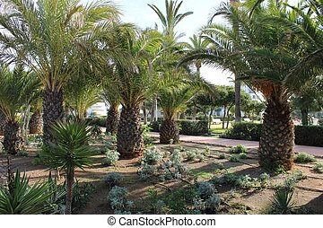 Garden with palm trees