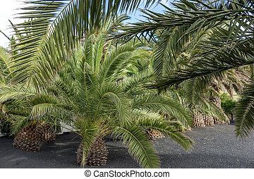 Garden with palm trees in the park