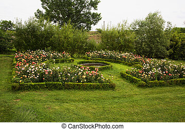 Garden with plants of rose