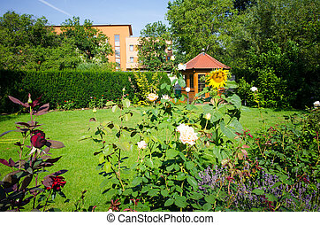 Garden with roses
