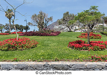 Garden with salvia at Funchal, Madeira Island, Portugal