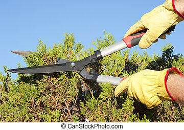 Garden work pruning hedge sky background - Hands with gloves...
