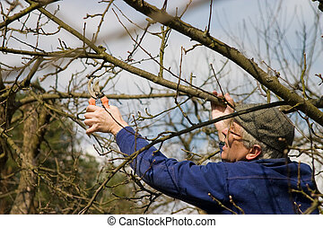 garden work, the summer resident cuts of branches of trees