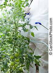 Garden worker spraying plants
