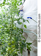 Garden worker spraying plants