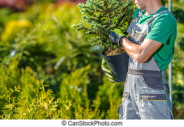 Garden Worker with Small Spruce Tree in His Hands
