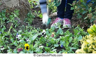 Garden Workers Planting Seedlings. landscaping of city...