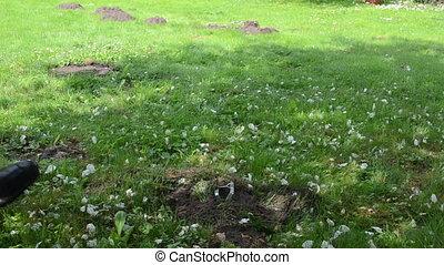gardener check trap