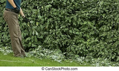 Gardener cleans cropped leaves with rake - Gardener cleans...