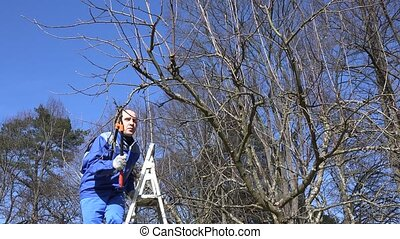 gardener climbing on ladder and pruning apple tree branches with clippers
