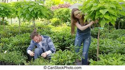 Gardener coworkers cutting leaves - Man and woman taking...