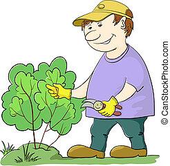 Gardener cuts a bush - Man gardener works in a garden, cuts...