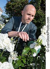 gardener cuts flowers