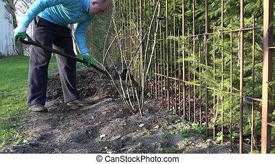 gardener dig soil garden