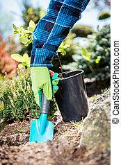 Gardener digging with a shovel.