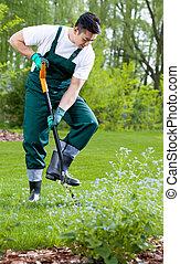Gardener digging with shovel