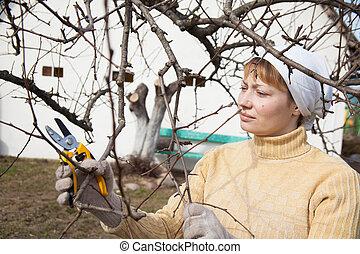 gardener doing maintenance work, cutting the tree