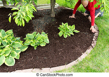 Gardener doing mulch work around the house kneeling down on...