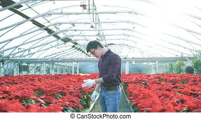 Gardener examining red flowerpots in gardenhouse 4K