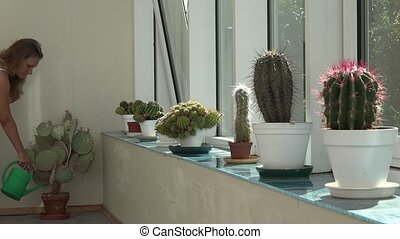 Gardener florist woman watering cactus plant with green...