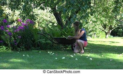 Gardener girl gathering windfall rotten apples fruits to ...