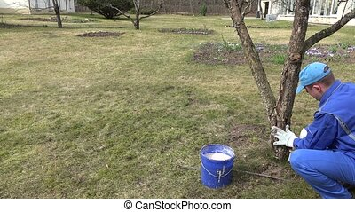 Gardener guy clean old bark and whitewash tree trunk with chalk in house yard