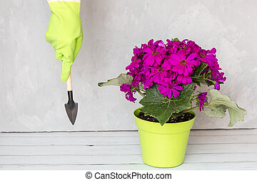 Gardener hand in rubber gloves holding garden instrument, next standing flower pot. Gardening, planting and people concept