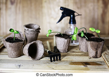 gardener hand sprout table