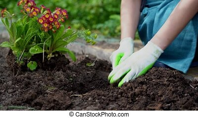 gardener hands dig hole with trowel plants flower sprouts - ...
