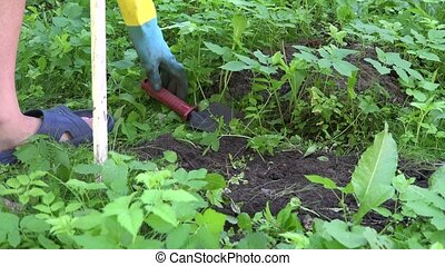 Gardener hands with gloves find dead mole animal in special trap in garden. 4K