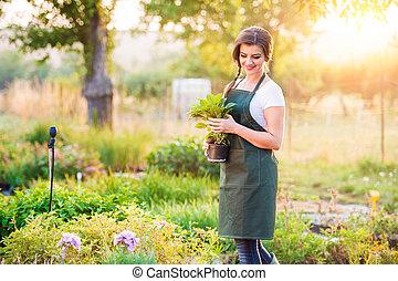 Gardener holding a seedling in flower pot, sunny nature