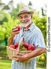 Gardener holds a basket of ripe apples