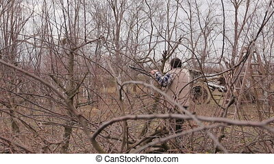 Gardener is cutting branches, pruning fruit trees with long...