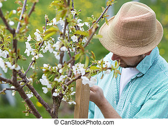 Young male gardener looking after trees in his backyard garden