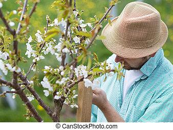 Gardener looking after trees - Young male gardener looking...