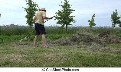 gardener man in shorts and hat rake hay dry grass in summer. 4K
