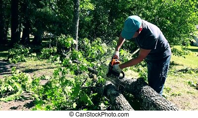 Gardener man sawing fallen tree branches after wind storm.