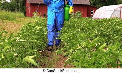 man spray vegetables