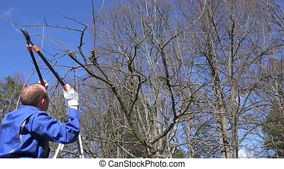 gardener man with two handle clippers pruning tree in fruit garden in spring