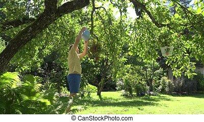 gardener man with watering can water flower pots hanging on fruit tree in summer garden. 4K